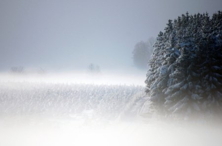 Winter forest - north, forest, snow, ice, siberia, winter, cold