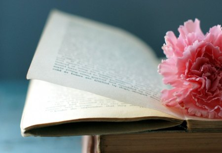 Flower and an open book - still life, files, book, nature, story, open, pink
