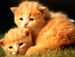little gingers