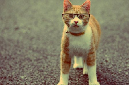 Ginger Cat With Glasses Cats Animals Background