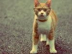 ginger cat with glasses