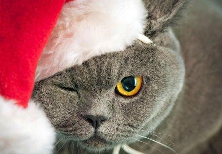 cute christmas cat cute christmas new year cat kitten animal