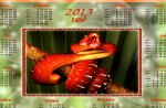 2013~YEAR of the SNAKE
