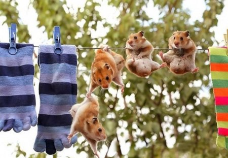 Wash Day - leaves, socks, hamsters, hanging, humour, clothes line