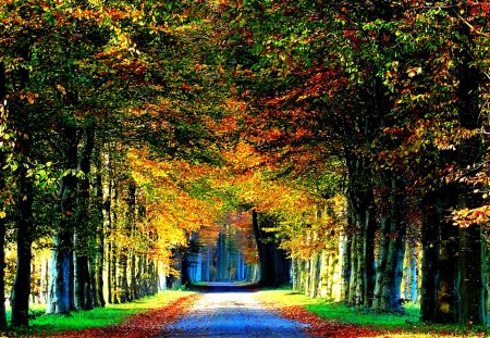 FOREST ROAD - autumn, alley, road, trees