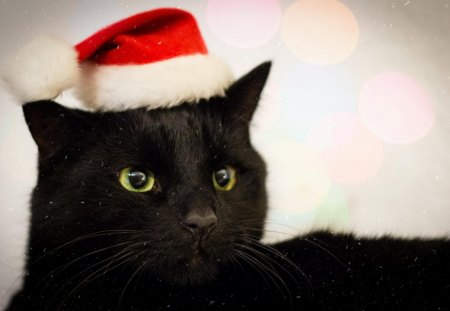 Christmas Black Cat Cats Animals Background Wallpapers On