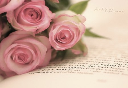.::Romantic::. - romance, love, book, roses, pink