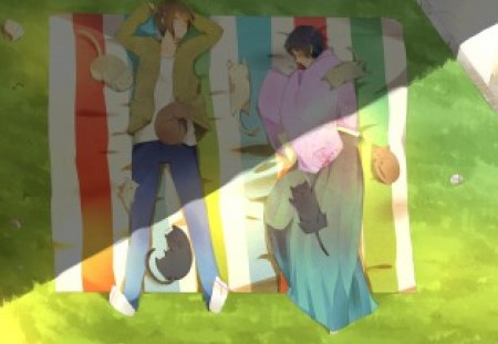 Axis Powers Hetalia - sleep, heracles, axis powers, anime, hetalia, cats, kiku