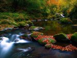 Scenic Forest River Stream Colors