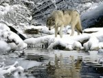 WINTER WHITE WOLF