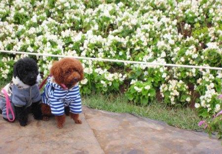 Cute model - dogs, lovely, model, enjoy the flowers, cute