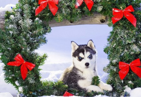 cute christmas husky wreath christmas holiday decoration ribbon new year - Husky Christmas Decoration