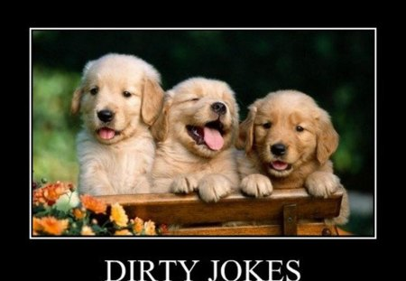 Dirty Jokes - funny dogs, funny pictures, puppies, dirty jokes, funny pics