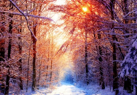 Winter - forest, sun, snow, sunlight, path, trees, winter, cold