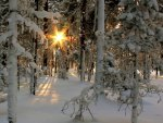 ღ.Rays of Light at Snow Trees.ღ