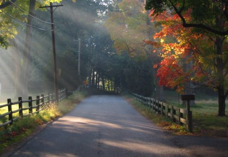 Park Scenery - orange leaves, road, sunrays, fence