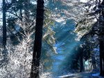 winter sun forest