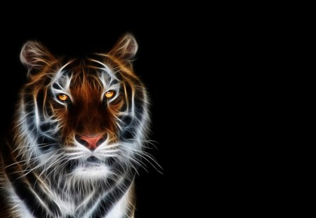 Tiger - animal, dark, black, tiger