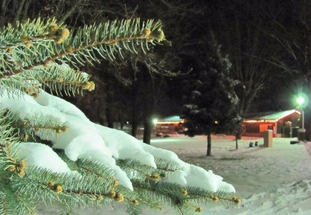 First Touches of Snow - limbs, pine, nature, park, trees, pine tree, winter