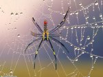colorfull_spider
