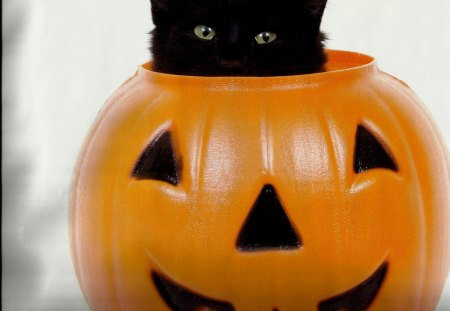A black kitten in a pumpkin - kitten, pumpkin, black, cute, feline, paws
