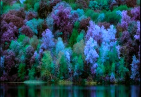 ✰Abundance of Forests✰ - pretty, colorful, wonderful, splendid, beautiful, splendor, colored trees, forests, magnificent, amazing, abundance, lakes, lovely, colors, trees, cool, Abundance of Forests, nature