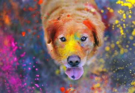 Colorful Dogs Animals Background Wallpapers On Desktop Nexus Image 1299281
