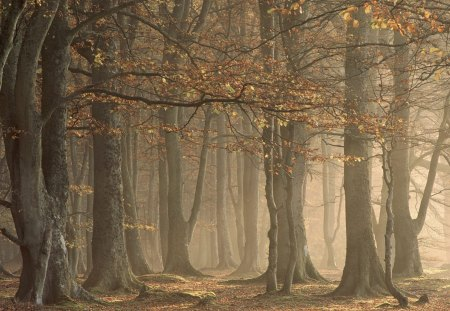 Arbroath Angus Scotland - autumn, forest, fall, nature