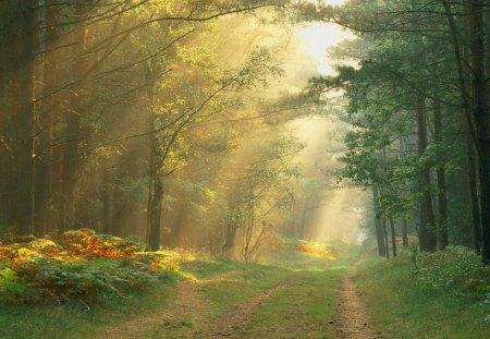 Untitled Wallpaper - forest, gift from god, green, heavens forest, nature, sunrise