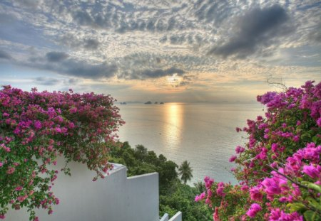 Sea of Siam Sunset - pink flowers, stairs, sunset, trees, clouds, picture, sea, cool, water, siam, flowers, beauty of nature