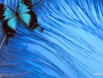 Butterfly on a Soft Feather