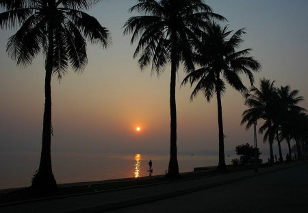 Beach Trees - Picture, Beach, Trees, Sunset