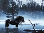 ✰Awesome Black Horse Winter✰