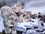 ✰Splendor of Snow Leopards✰