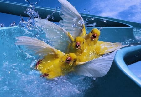 Aqua Park for birds - wings, yellow, park, canary, happy, animal, cute, water, bird, feather, aqua, funny, blue
