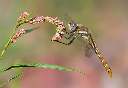 Dragonfly - Picture, Beautiful, Dragonfly, Cool
