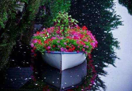 Flower Boat - beautiful coloured flower, lake, boat, flower