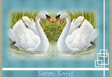 SWAN SONG! - REEDS, LAKE, FRAMED, SWANS