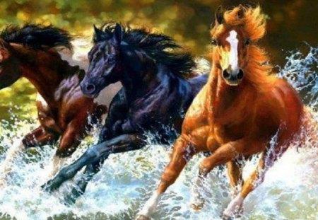 Horses running through water at shore - Horses & Animals ... - photo#26