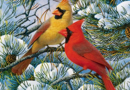 Winter cardinals other abstract background wallpapers - Pictures of cardinals in snow ...
