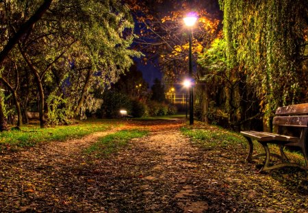 Beautiful Night Forests Amp Nature Background Wallpapers