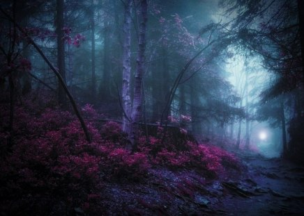 Mystic woods forests nature background wallpapers on - Mystical background pictures ...