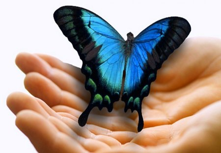 Moment in time - Morpho, hands, wings, butterfly, touch, gentle