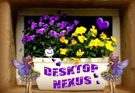 ♥   Desktop Nexus Pansies  ♥ - wally, yellow, Pansy, contest, spring, Pansies, purple, Desktop Nexus, heart, summer, fairies, flowers, nature