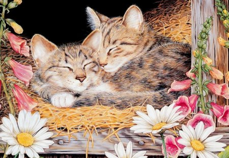 Sleeping kittens - sleep, cat, art, kitten, flower