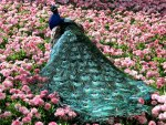 Beautiful Peacock in the Flowers