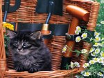A kitten with flowers in a basket