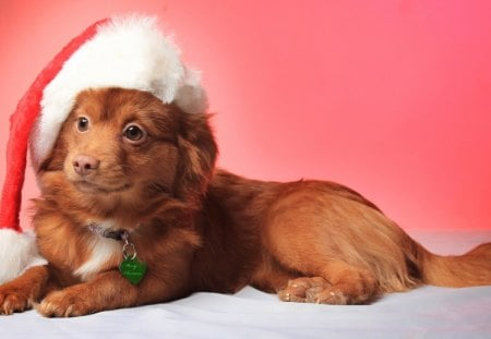 Comments on Christmas Dogs - Dogs Wallpaper ID 1312846 - Desktop ...