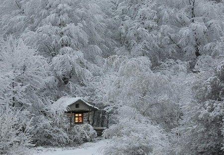 Tiny Cabin In The Woods Winter Nature Background Wallpapers On Desktop Nexus Image 1313461