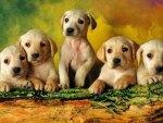 Five Golden Cuties